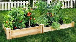 raised beds in the garden or how to