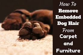dog hair out of carpet and furniture