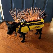 Spiked Vests New Fencing Latest Tools To Protect Pets From Coyotes Daily Breeze