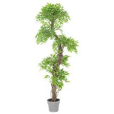 large indoor plants com