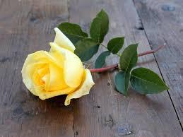 ورد اصفر وابيض صور ورد اصفر وابيض جميله وداع وفراق