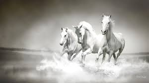 horse wallpapers best wallpapers