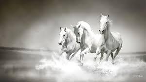 horse wallpapers best wallpapers