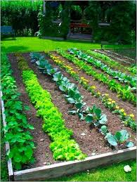get ready for gardening news sports