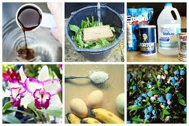 11 homemade fertilizer recipes for