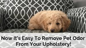 pet odor from your upholstery