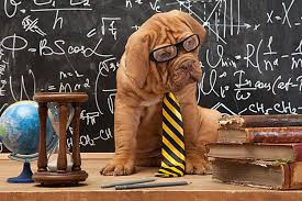 dog iq test how smart is your dog