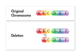 genetic mutations flashcards quizlet