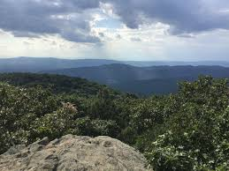 Saw A Bear On Bearfence Mountain Trail Shenandoah National Park Virginia Hiking