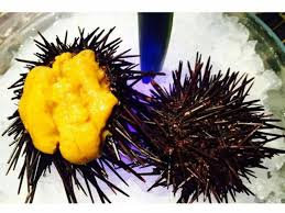 Try 'uni', the edible part of sea urchin at Yuuka - The Economic Times