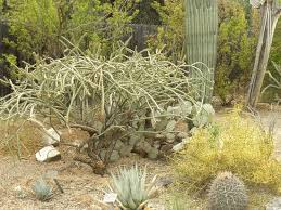 picture of tucson botanical gardens
