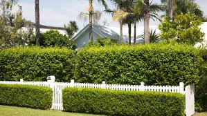 Hedges For Sound Proofing Stuff Co Nz