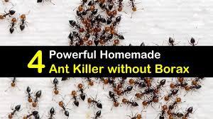 View Borax Sugar Ant Killer Images