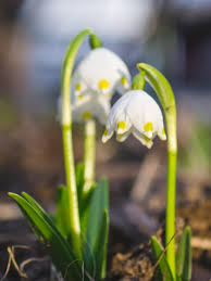 Cvetoča pomlad na mojem vrtu
