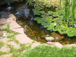 Habitat Guidelines Outdoor Ponds For Aquatic Turtles Colorado Reptile Humane Society