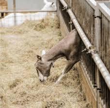 Good Fences And Good Gates Make Good Goats Chelsea Green Publishing