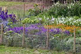 Simple Chicken Wire And Post Garden Fencing Plant Flower Stock Photography Gardenphotos Com