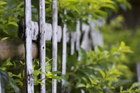 How To Make A Bamboo Privacy Hedge Bamboo Plants Online