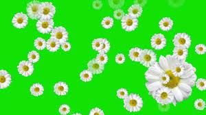 green screen flowers falling star