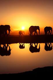 elephant mobile wallpaper mobiles wall