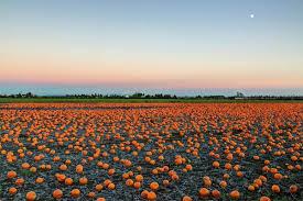 Best Pumpkin Patches in Ottawa