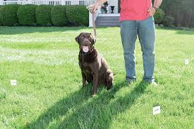 Petsafe Stay Play Wireless Dog Fence Review How Does It Work What Are The Features