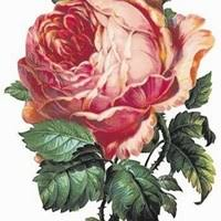 Ivy Mcdonald Obituary - Wigan, Lancashire | Legacy.com