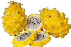 黄皮火龙果营养价值
