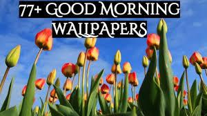77 good morning wallpapers