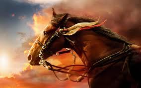 war horse hd wallpaper