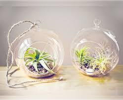 air plants why is it great to have
