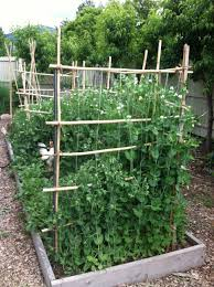 Lessons Learned From A New Vegetable Gardener At The Time Of Post Her Third Summer Of Growing Read Mo Garden Trellis Vegetable Garden Design Pea Trellis