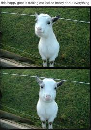 quotes❤️ on a happy goat just in case you were having