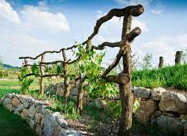 Image Of Wooden Grapevine Trellis On Terrace Of Stones Grape Trellis Grapevine Growing Vine Trellis