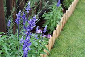 23 Cheap Amazing Garden Edging Ideas You Can Try Trees Com