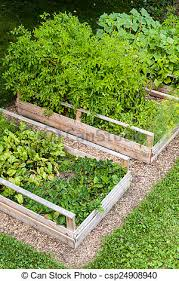 vegetable garden in raised boxes three