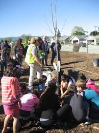 Sutter Tree Planting Inspires Students and Renews Campus - The Silicon  Valley Voice