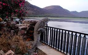 Crocodile Climbs 4ft Fence In Rajasthan India In Terrifying Photo Metro News