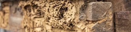 Get Termite Bonds Pics