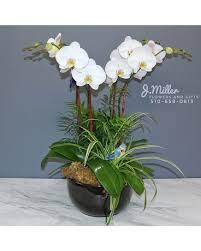 orchid garden in oakland ca j miller