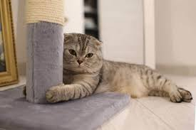 the 25 best cat scratching posts and