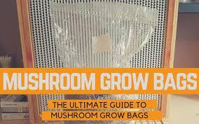 mushroom grow bags the ultimate guide