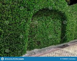 Boxwood Hedge Growing In The Shape Of A Fence Beautiful Decoratively Trimmed Shrub Background With Copy Space Garden Care Stock Image Image Of High Garden 173000889