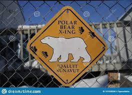 Polar Bear Crossing Sign On A Fence Editorial Image Image Of Black Polar 181928560
