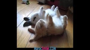 صور أرانب صغار رائعة الجمال Youtube