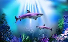 تحميل خلفيات أسماك القرش البحر الأسماك تحت الماء الفن عريضة
