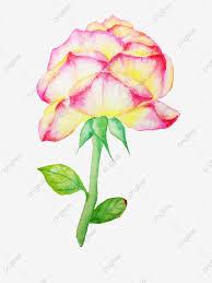 زهور الورد ملكة الزهور القمر الأحمر وردي وردة الزهور وردي وردة