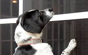 Petscreen Dog Cat Resistant Screens Phifer