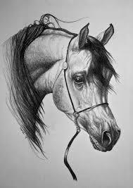 Arabian Horse By Nutlu Paard Tekeningen Dieren Tekenen Paarden