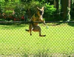 Invisible Dog Fence Pet Stop Pet Fence Systems Underground Hidden Fence Installation Oregon